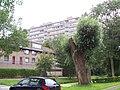 Delft - panoramio - StevenL (41).jpg