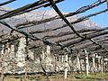 Dettaglio pergole terrazzamenti della vite Donnas 2.JPG