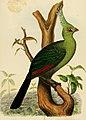 Die Vogel Ost-Afrikas. Baron Carl Claus von Deer Decken's Reisen in Ost-Africa. Bd. 4 (1870) (20923923426).jpg