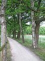 Dinsl-Hiesfeld-Rotbachweg-Birken und Eichen.jpg