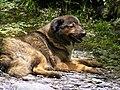 Dog - Yunnan - China.jpg