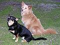 DogsMixedBreedlittermates.jpg