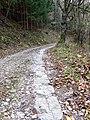 Dolenji Novaki Slovenia - Road 3.jpg