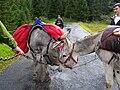 Donkeys meeting.jpg