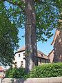 Dorflinde in Waizenbach.jpg