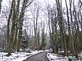 Drive through the woods to Ashdown Place - geograph.org.uk - 320076.jpg