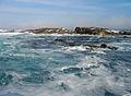 Duiker Island Les otaries du Cap (3).JPG