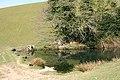 Dulverton, pond - geograph.org.uk - 390850.jpg