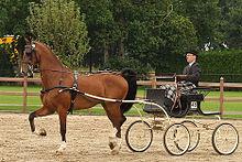 Dutchharnesshorse.jpg