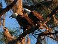 Eagle alarm clock - panoramio.jpg