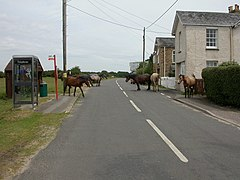 East End, ponies - geograph.org.uk - 1376170.jpg