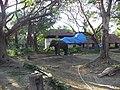 East Nada, Guruvayur, Kerala, India - panoramio (6).jpg