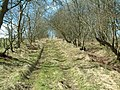 East of Lingo - geograph.org.uk - 153717.jpg