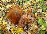 Eichhörnchen im Herbst.jpg