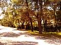Ekali, Greece - panoramio (13).jpg