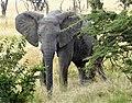 Elefant23B.jpg