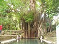 Enchanted Balete Tree in Lazi.JPG