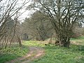 Entrance to Coombe Wood - geograph.org.uk - 384363.jpg