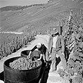 Ernst en Erica Klein bekijken de oogst, Bestanddeelnr 254-4169.jpg
