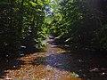 Esopus Creek at Maben Hollow Road, Oliverea, NY.jpg