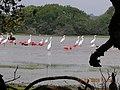 Estero de las garzas - N4 01.201 W72 09.000 - panoramio.jpg
