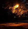 Evening in the Auckland Domain. Street lamp. - panoramio.jpg
