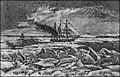 Expedíció1872-4.jpg