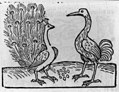 Fable of crane and peacock LCCN2005692131.jpg