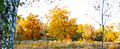 Fall Foliage at Duke Farms, Hillsborough.jpg