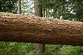 Fallen tree - geograph.org.uk - 549849.jpg