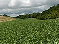 Farmland, Wherwell - geograph.org.uk - 471365.jpg
