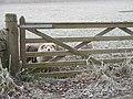Feed me - geograph.org.uk - 1064474.jpg