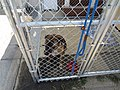 Fence Factory Pet Adoptions - panoramio (2).jpg