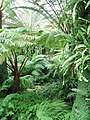 Ferns, The Royal Botanic Garden, Edinburgh - geograph.org.uk - 1478238.jpg