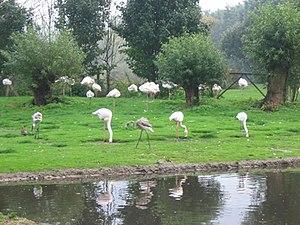 Martin Mere - Flamingos at Martin Mere Wetland Centre