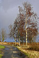 Flickr - Laenulfean - way on a stormy day i.jpg
