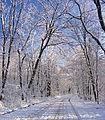 Flickr - Nicholas T - Road to Somewhere.jpg