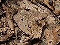 Fliege 1 Nationalpark Tai.jpg