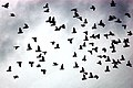 Flock of Birds - Flickr - Picture Perfect Pose.jpg