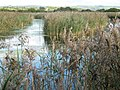 Flooded peat workings, Westhay Moor Nature Reserve (geograph 2652290).jpg
