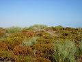 Flora endemica.jpg