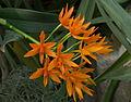 Floraison orange.jpg