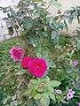 Flower's in Baghdad 4.jpg