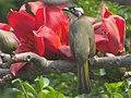 Flower Lover (13418765093).jpg