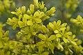 Flower Romania (42775190954).jpg