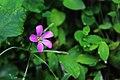 Flower in hidden forest.jpg