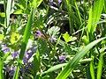 Flower in the grass.jpg