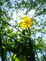 Floweringreen.jpg