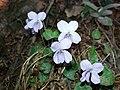 Flowers79.jpg