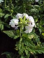 Flowers - Uncategorised Garden plants 140.JPG
